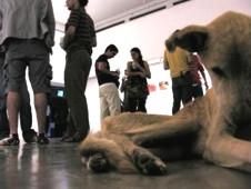 Cane morto ad una mostra di Vargas ed acqua per cani