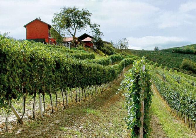 Azienda Agricola Ressia Vini piemontesi di qualità